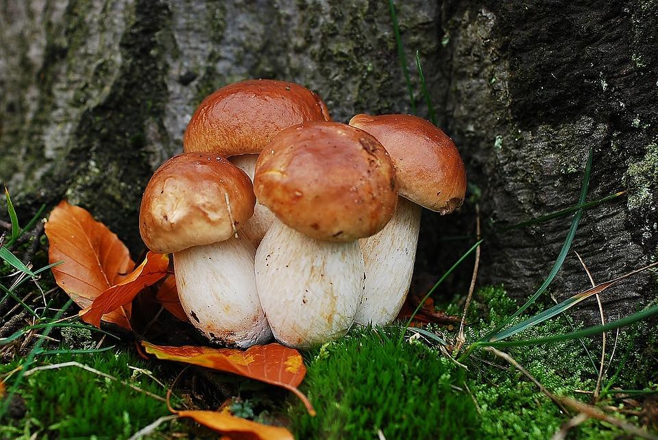 Funghi porcini e patate al forno